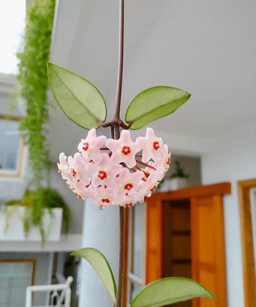 Flores de nuestros jardines